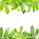 Fresh Green leaves background Royalty Free Stock Image