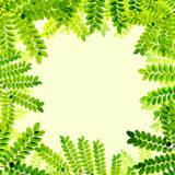 Fresh Green leaves background Royalty Free Stock Images