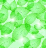 Fresh green leaves background seamless pattern Stock Image