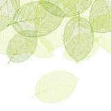 Fresh green leaves background seamless pattern vector illustration