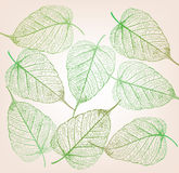 Fresh green leaves background. Stock Image