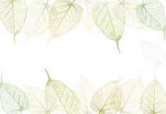 Fresh green leaves background. Royalty Free Stock Photos