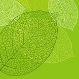 Fresh green leaves background - vector stock illustration