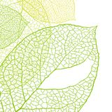 Fresh green leaves background - vector Royalty Free Stock Photos
