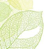 Fresh green leaves background - vector vector illustration
