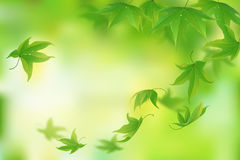 Fresh green leaves background Stock Photography