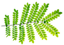 Fresh Green leaves background Stock Image