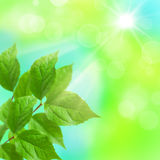 Fresh green leaves on a blurred background Stock Photo