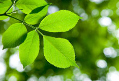 Fresh green leaves Stock Image
