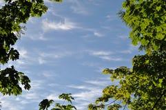 Fresh green leaves border. Against blue sky Royalty Free Stock Photos