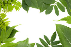 Fresh green leaves border. On white background Royalty Free Stock Photo