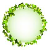 Fresh green leaves border. + EPS10. Vector file Royalty Free Stock Photo