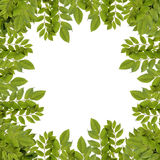 Fresh green leaves border. Fresh green leaves border isolated on white background Royalty Free Stock Photography