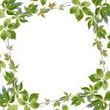 Fresh green leaves border on white Stock Photo