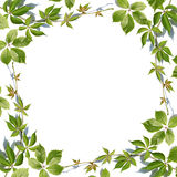 Fresh green leaves border on white. Background Stock Photo