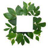 Fresh green leaves borderon white. Flat lay. Top view. stock images