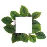 Fresh green leaves borderon white. Flat lay. Top view. Stock Photo