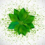 Fresh green leaves on bright green splashes. Stock Photography