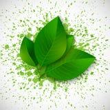 Fresh green leaves on bright green splashes. Stock Photos