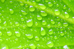 Fresh green leaves. Bright green leaf photo with water drops in the morning. Shallow depth of field Stock Images