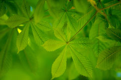 Fresh green Leaves Stock Photography