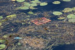 Fresh green leaves and dry fallen pine needles with branches floating mixed with garbage on calm river. Water on warm sunny day royalty free stock images