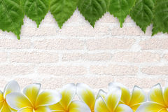 Fresh green leaves and flower. Fresh green leaves and Plumeria  flower  frame/ border Royalty Free Stock Images