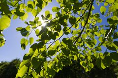 Fresh green leaves in a forest framing the sun in the middle royalty free stock image