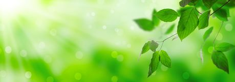 Fresh green leaves. On a shiny background royalty free stock image