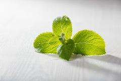 Fresh green leaves on grey board Stock Photo