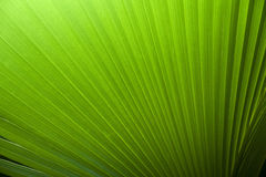 Fresh green leaves. Fresh green leaf backgrounds. Shallow depth of field Royalty Free Stock Images