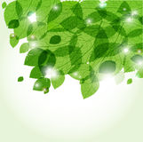 Fresh green leaves and lights. Ecological vector background Vector Illustration