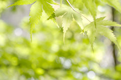 Fresh green leaves Stock Images