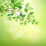 Fresh green leaves on natural background Royalty Free Stock Images