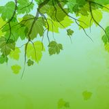 Fresh Green Leaves. On Natural Background. Vector Illustration. Eps 10 Royalty Free Stock Image