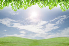 Fresh green leaves ,natural green background with flare. Stock Image