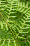 Fresh green leaves nature Stock Images
