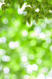 Fresh and green leaves Royalty Free Stock Photos