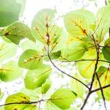 Fresh green  leaves over blurred  background, sun light, spring Stock Photos
