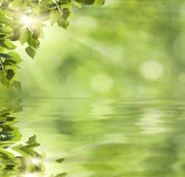 Fresh green leaves over water Stock Image