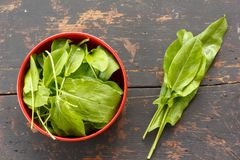 Fresh green leaves of sorrel on the old black table. Top view closeup Royalty Free Stock Photos