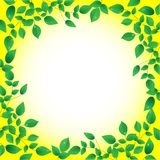 Fresh green leaves and sun shine,  frame Royalty Free Stock Photo