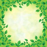 Fresh green leaves and sun shine,  frame Royalty Free Stock Images