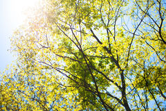Fresh green leaves and sunshine Stock Photos