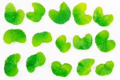 Fresh green leaves texture isolated on white ba Stock Photos