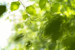 Fresh green leaves touching water stock images