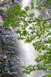 Fresh green leaves. Tree on waterfall background, in the forest Stock Photography