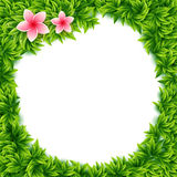 Fresh green leaves and tropical flowers frame Royalty Free Stock Photography