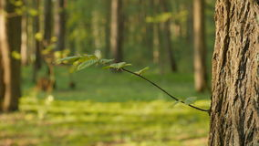 Fresh green leaves on twig, young leaves. stock footage