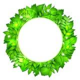 Fresh green leaves vector border Royalty Free Stock Photo